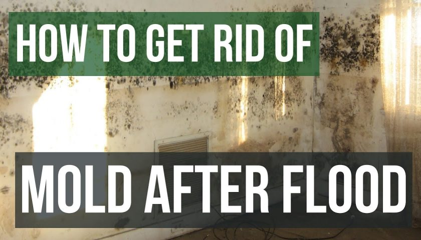 Top 5 Steps to Follow for Mold Remediation