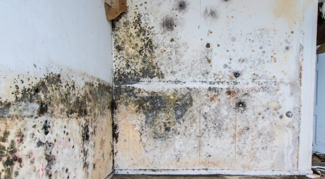 Essential Tips to Remove Mold