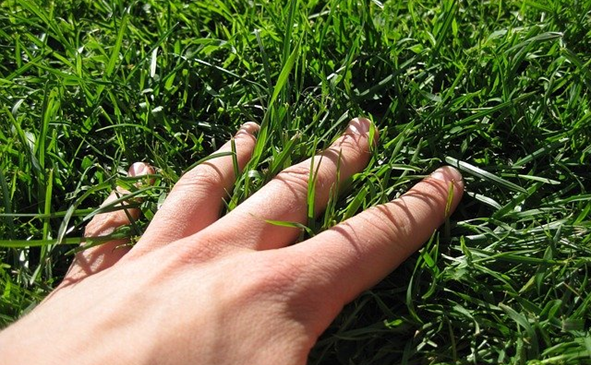 What benefits can a healthy lawn provide?